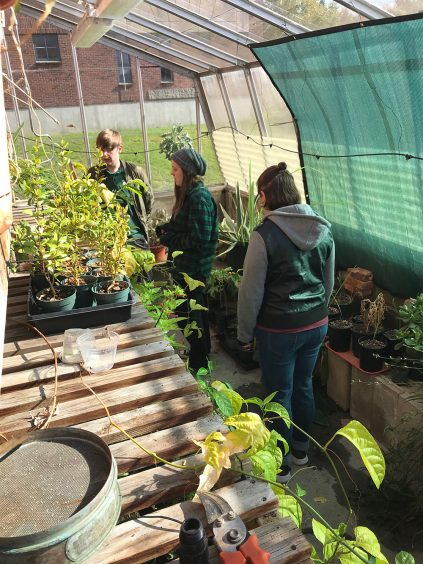 Students in the UMM campus greenhouse
