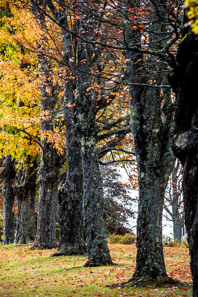 Trees lining the campus grounds