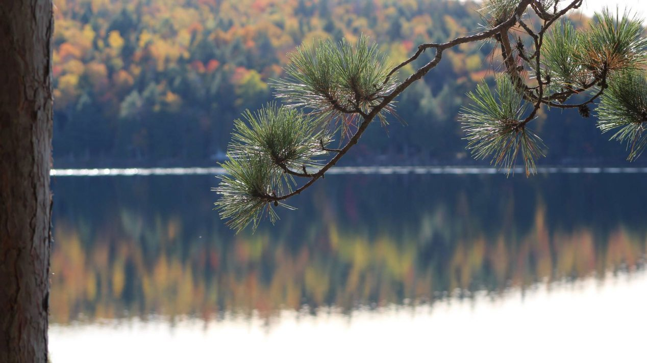 An image of a lake in autumn
