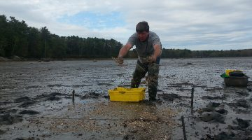 A man is shown standing on a coastal mudflat, using a spreader on the sand