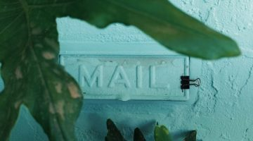 Photograph of a mail slot in a wall behind a green plant