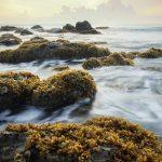 seaweed on rocks in a stormy sea