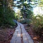 wooden path leading through the forest