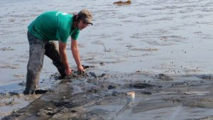 A student wearing waders shown casting a net on a mudflat